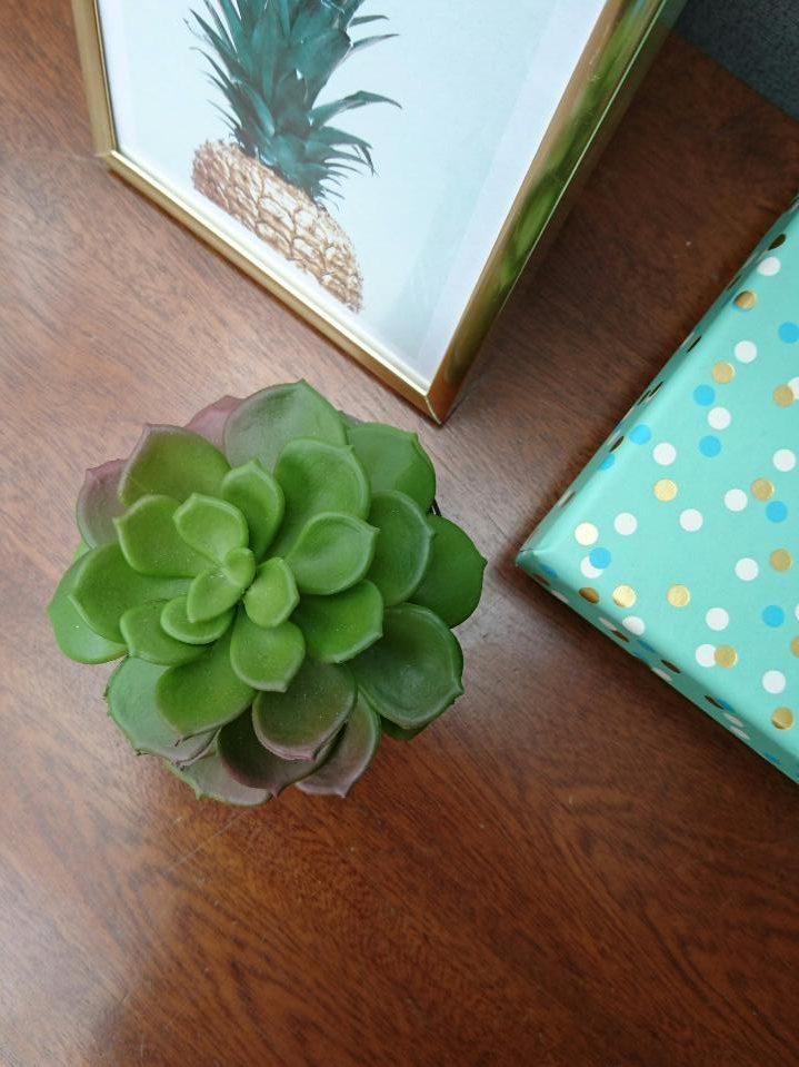 Faux succulents HomeSense