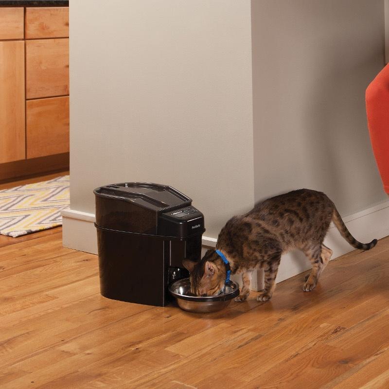 Automatic cat feeder UK