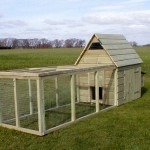 Why choose to have chickens in the garden?