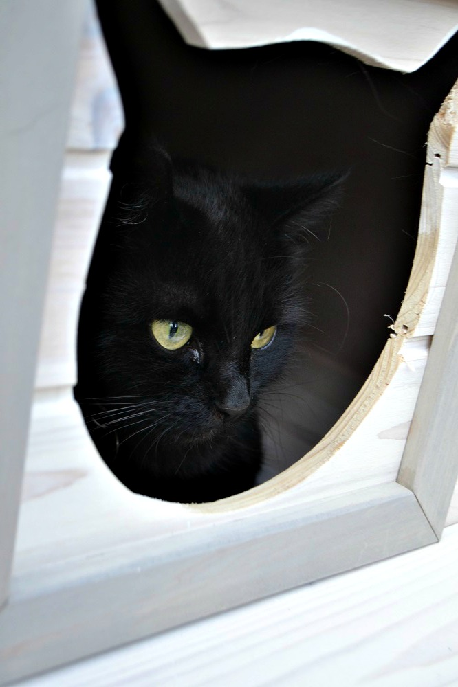 Wooden outdoor cat house