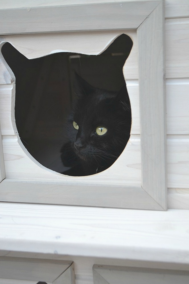 Cats can shelter in the Madeira cat house