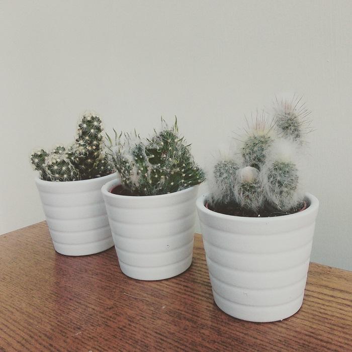 Ikea cacti