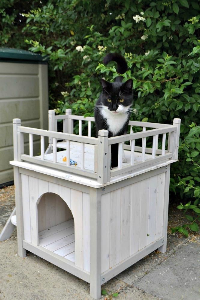 Prince Cat Den