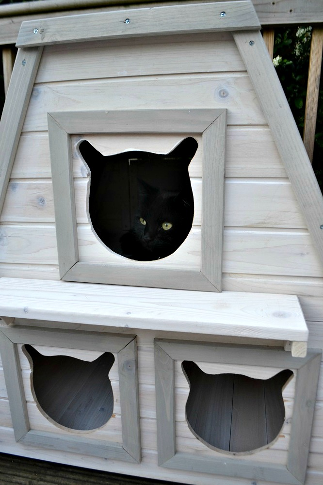 Wooden house for cats